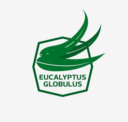 Research paper on eucalyptus globulus